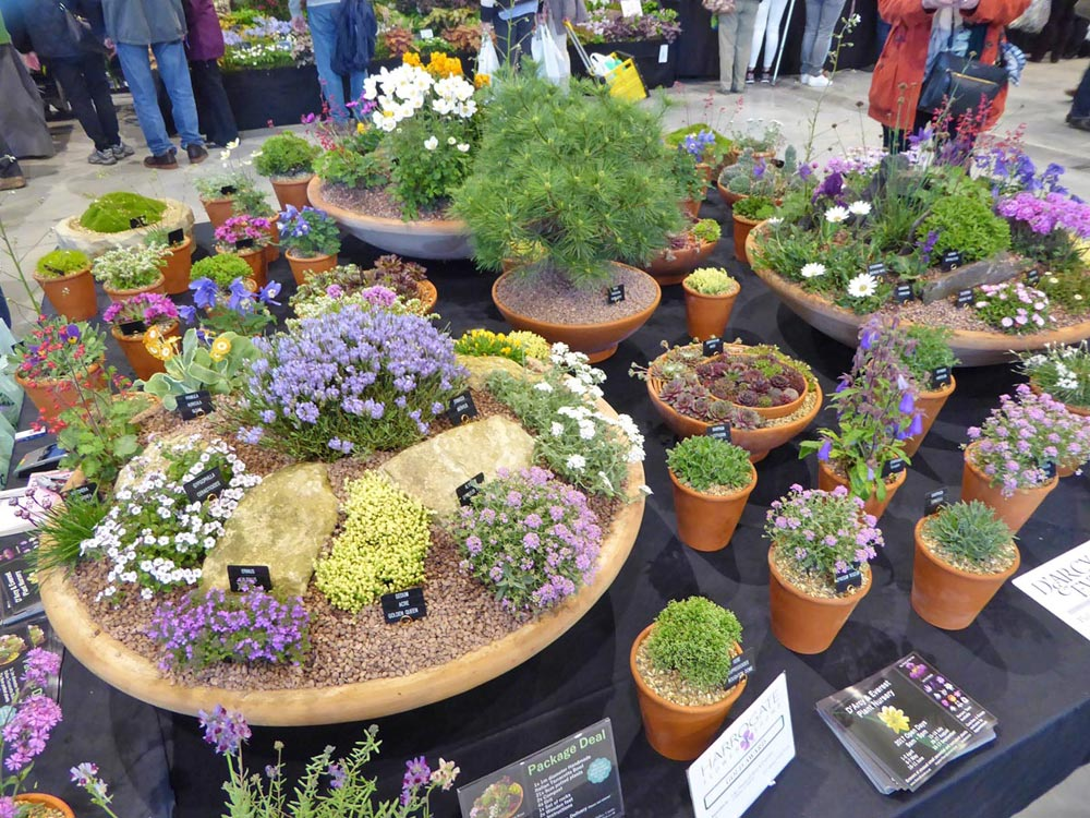 Alpines at Harrogate Sprint Show 2017